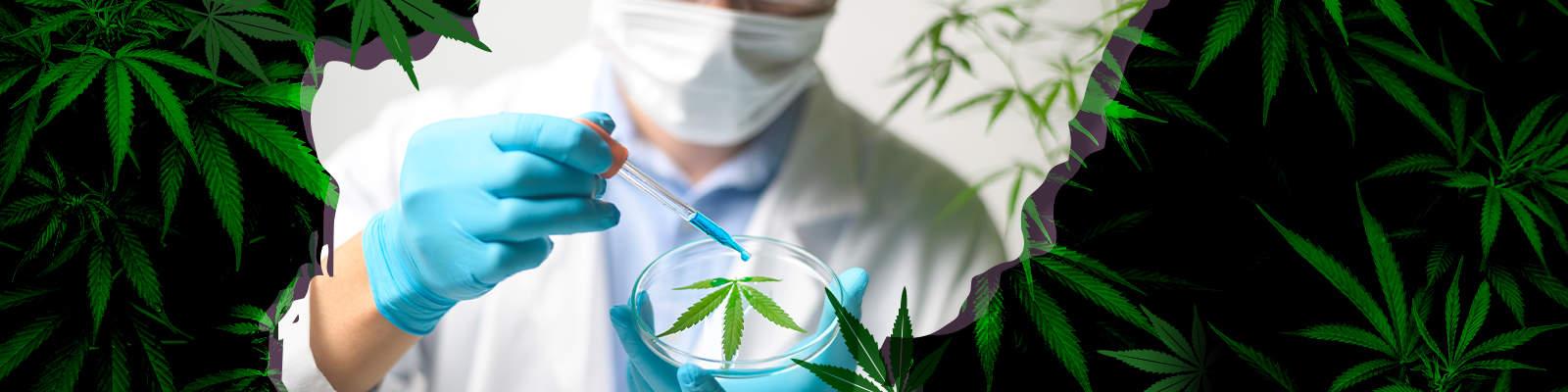 Highest Earning Cannabis Careers